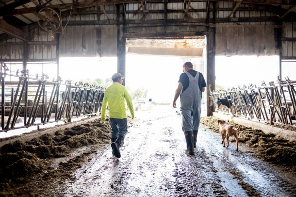 Tecpile and Rosenow walk through the cow barn at the farm.