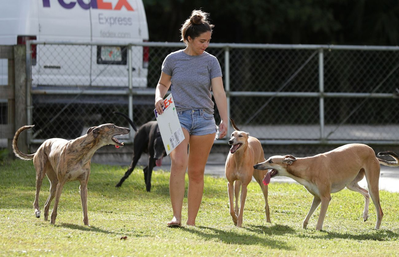 Alexandra Stratemann, 21, walks with former greyhound racing dogs in West Palm Beach, Florida.