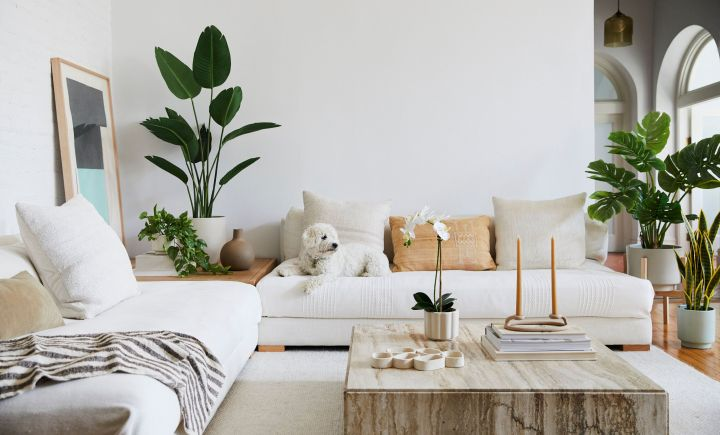 "We tried&nbsp;<a href=""https://fave.co/31UC9GP"" target=""_blank"" rel=""noopener noreferrer"">The Sill's new faux plant line</a>."