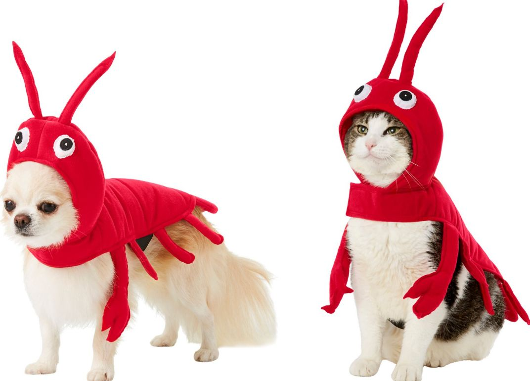 3 out of 5 stars with 1 ratings. These 25 Cat Halloween Costumes Are Pure Instagram Gold Huffpost Life