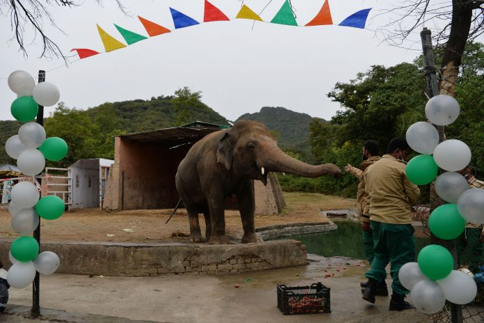 A caretaker feeds Kaavan during his farewell ceremony on Nov. 23, before he travels to a sanctuary in Cambodia later this mon