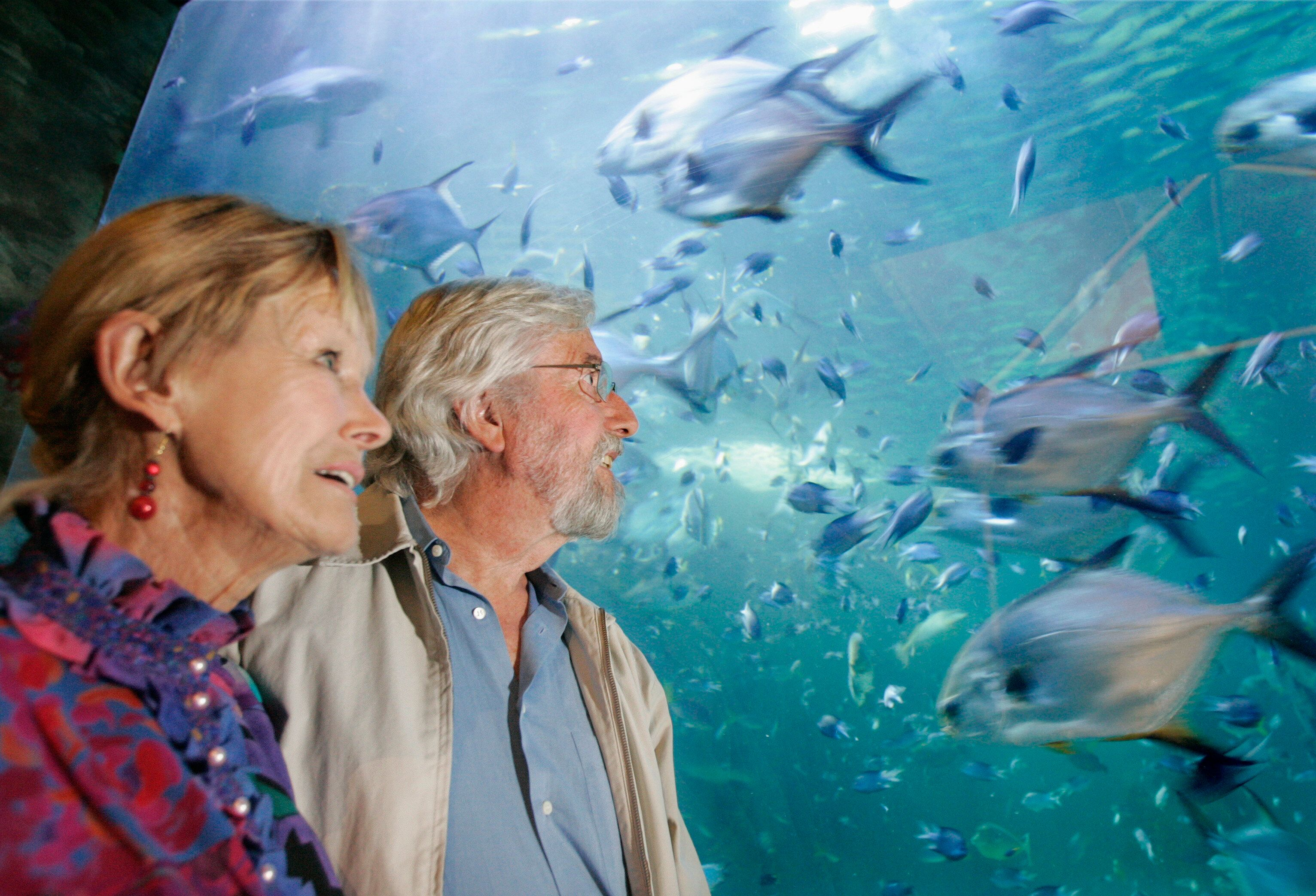 """Taylor and explorer Jean-Michel Cousteau, who appears in """"Playing with Sharks,"""" in 2006."""