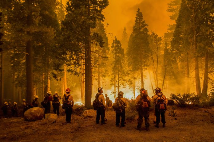 Firefighters stand by flames at the Caldor fire after starting a Backfire. The Caldor fire has grown to over 130,000 acres an