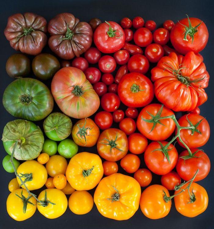 Tomates e suas cores.