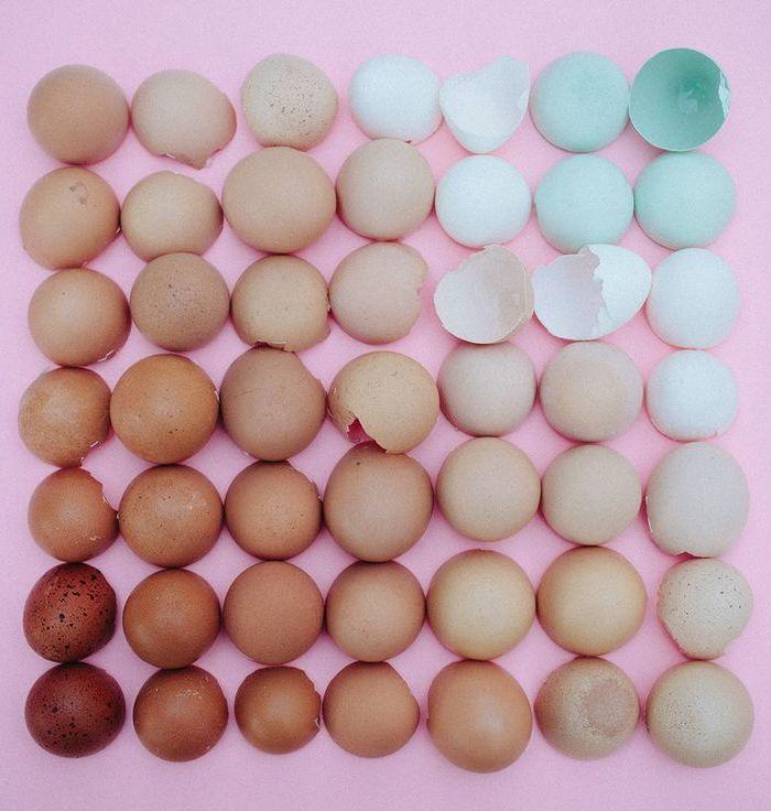 Alguns tipos de ovos e suas particularidades.