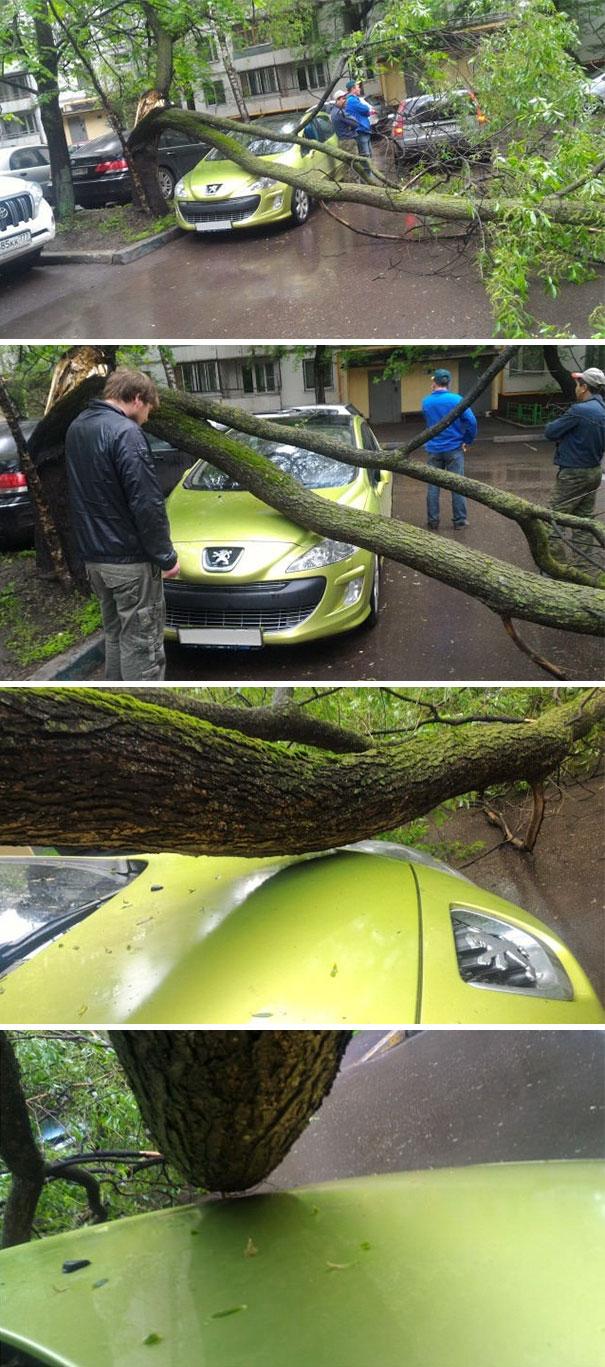 Carro debaixo de árvore