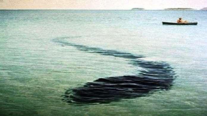 Mostro marinho