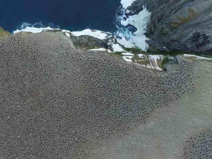 la Colonia de pingüinos