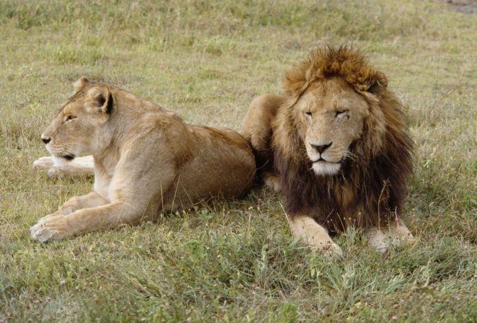 Tendencia observada especialmente en mamíferos
