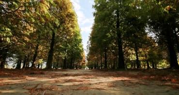 彰化大村景點|大村隱藏版景點落羽松森林秘境,異國浪漫風情