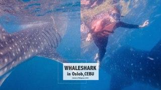 宿霧自由行|第二次去歐斯陸和鯨鯊游泳+蘇米龍島拖尾沙灘浮潛半日遊