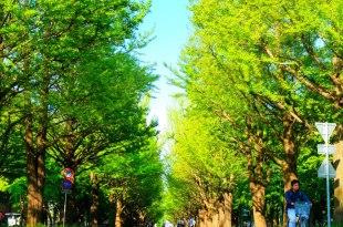 [2017日本北海道親子遊] 推薦景點:美的不像大學的北海道大學