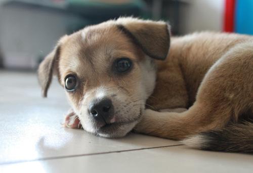 狗能吃橘子嗎 不要經常給狗狗吃橘子 - 愛寵物咨詢網