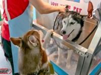 三創生活5週年慶體驗「只要11分 寵物自助澡堂」,還有《寵;生活 寵物選品快閃展》多種活動可逛