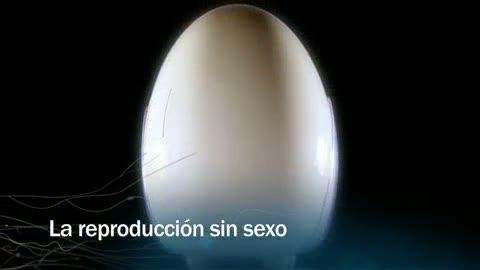 Ver vídeo  'Redes - La reproducción sin sexo - avance'