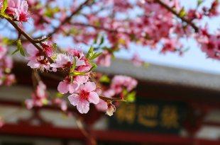 豫見人生,春天遊中原_河南必去景點推薦,一眼望盡半部滄桑_商丘古城
