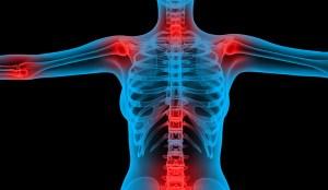 сухожилия и стави