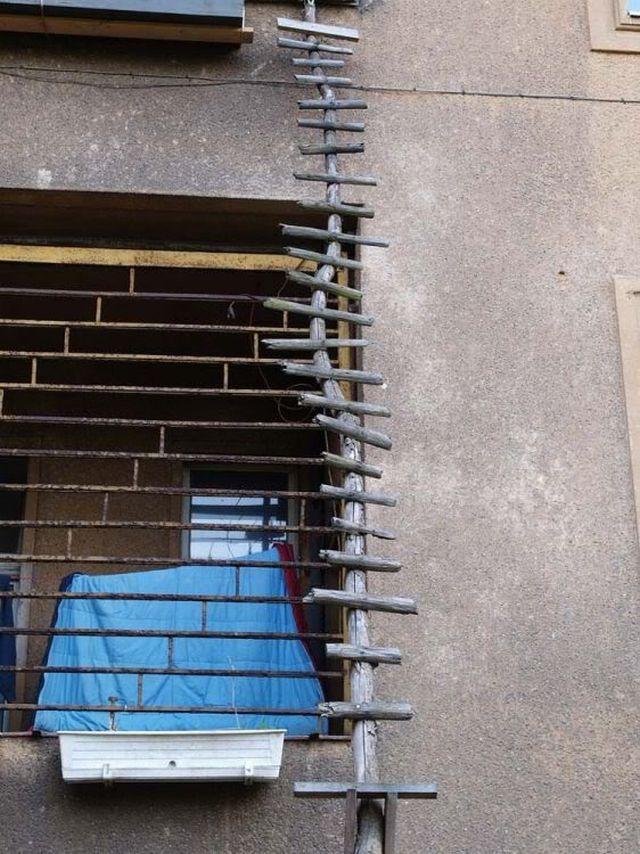 Ladders For Cats 8 Pics Izismile Com