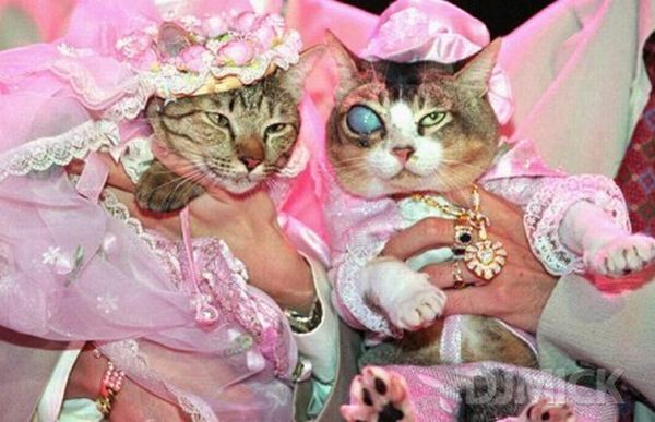Pet Weddings 23 Pics