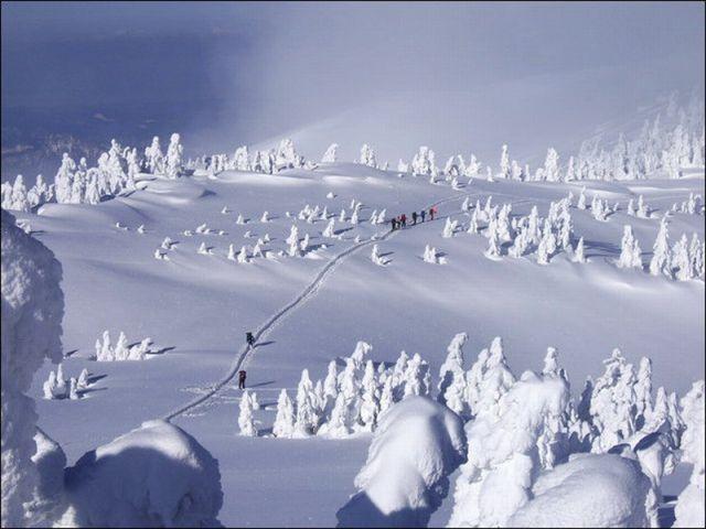 """""""Snow Monsters"""" in Japan"""