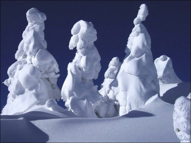 """Snow Monsters"" in Japan"