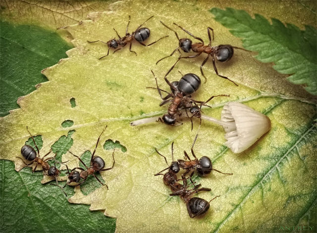 Fascinating Life of Ants