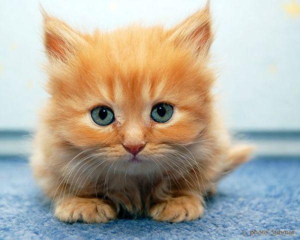 Awww, Adorable Kittens (100 pics) - Picture #97 - Izismile.com