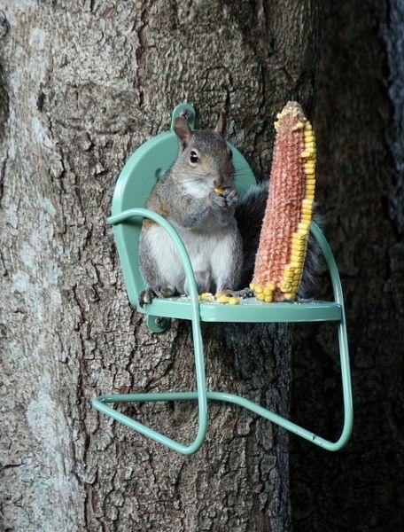 A Squirrel Chair