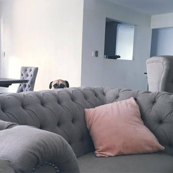 Dog Constantly Creeps Up On His Owner