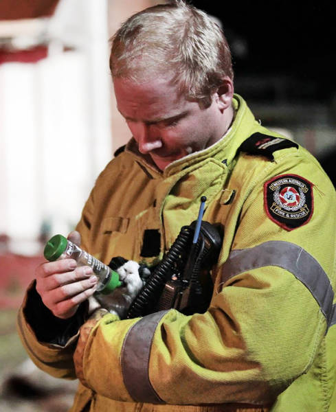 Kudos To Firefighters Who Risk Their Lives To Rescue Animals