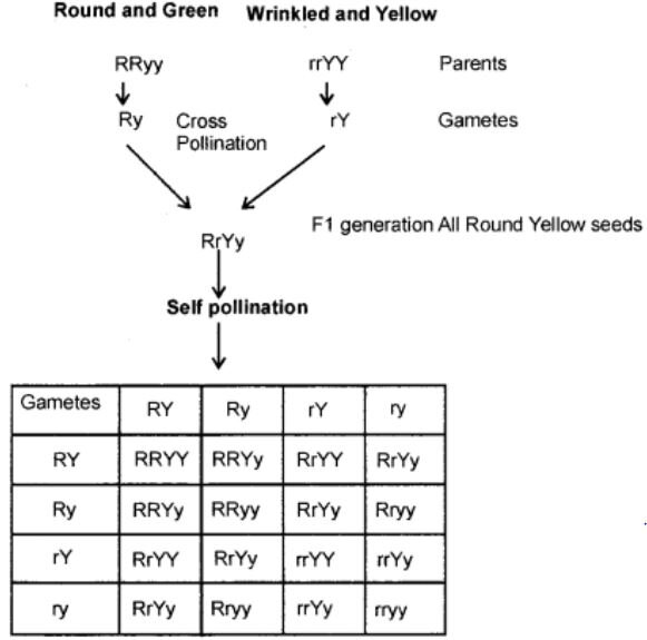 rsz class10 science ch9 image3