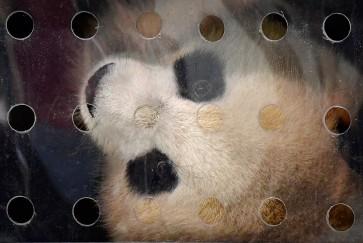 Panda mania hits Germany as China's cuddly envoys arrive