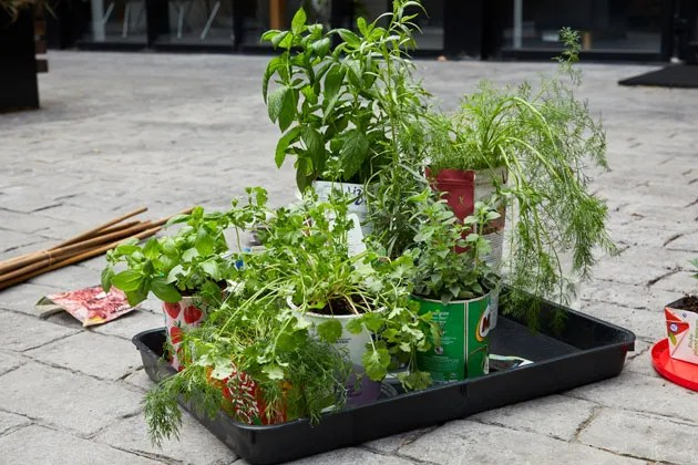 How To Grow Herbs Chillies In Your Kitchen Garden Features Jamie Oliver