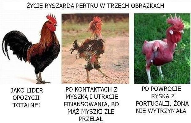 petru_maderar19.jpg?zoom=2