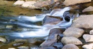 白冷圳、抽藤坑半日遊,生態豐富的小溪頭。