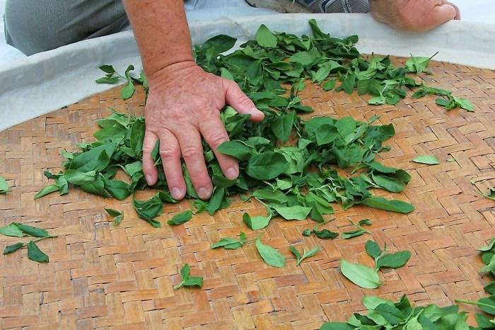 嘉義竹崎一日遊,發現166縣道之美,親手揉茶造紙。