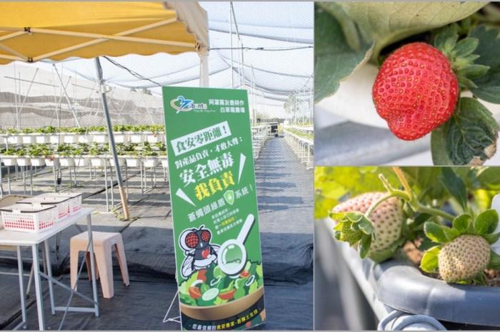 台中霧峰,阿罩霧友善耕種白草莓農場,免門票的高架草莓園。