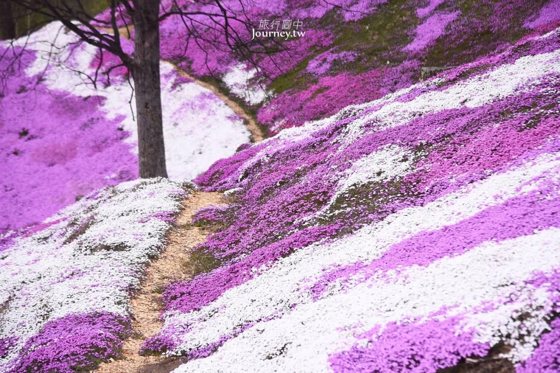 北海道,芝櫻,瀧上芝櫻公園,東藻琴芝櫻公園,巴士,花期