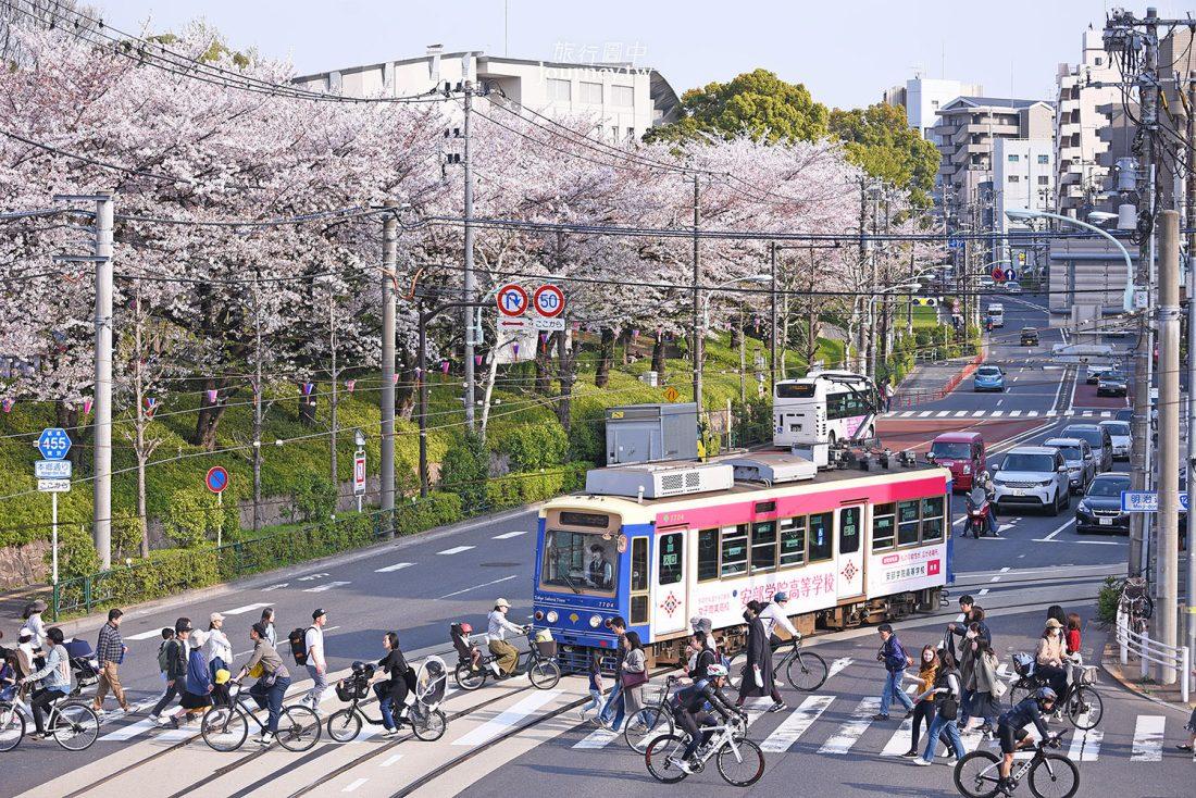 東京,王子,飛鳥山公園,櫻花,祭典,荒川線,路面電車