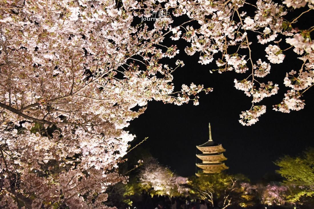 京都,京都市,東寺,京都景點,夜櫻,櫻花,關西,日本