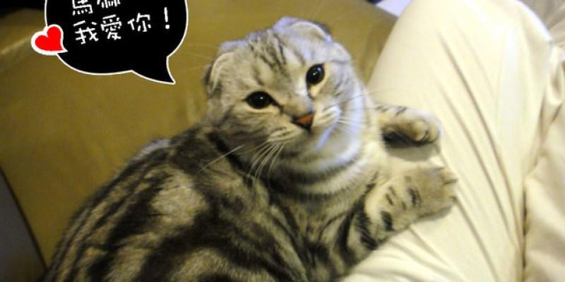 貓咪札記:3喵塞奶的方式~(3喵換飼料:愛肯拿,Ever clean貓砂超好用)