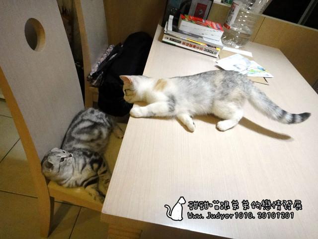 貓咪札記:甜甜喵跟弟弟的戀情發展~