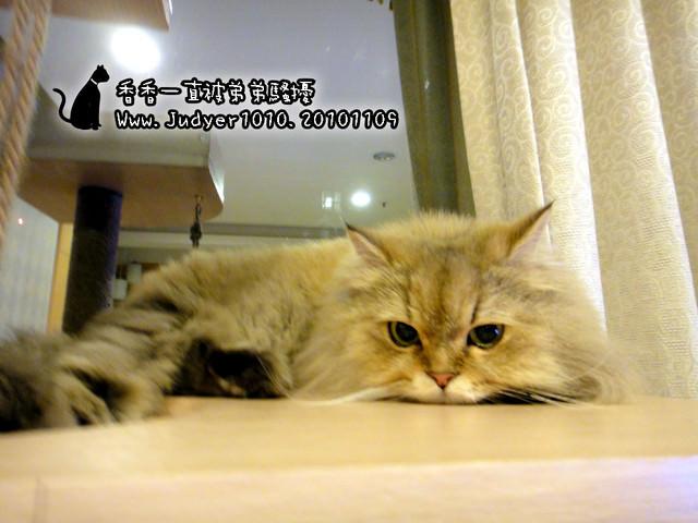 貓咪札記:香香一直被弟弟騷擾!