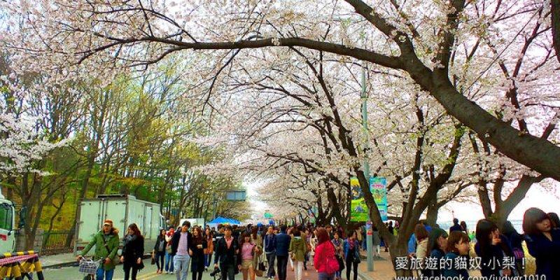 【韓國賞櫻/ 汝矣島櫻花季】汝矣島輪中路,去浪漫的櫻花步道走走吧!