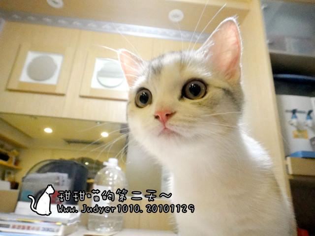 貓咪札記:甜甜喵的第二天~