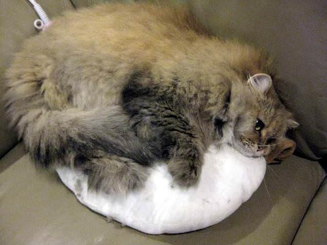 貓咪札記:我跟香香一起看片