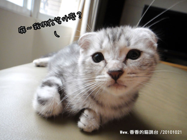 貓咪札記:香香的貓跳台