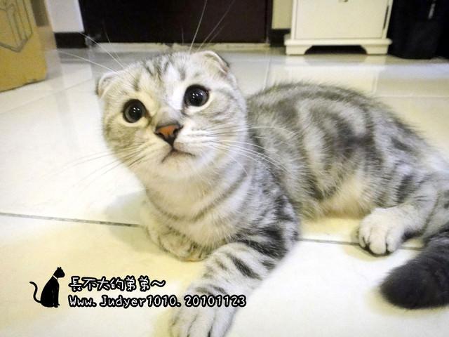 貓咪札記:長不大的弟弟!