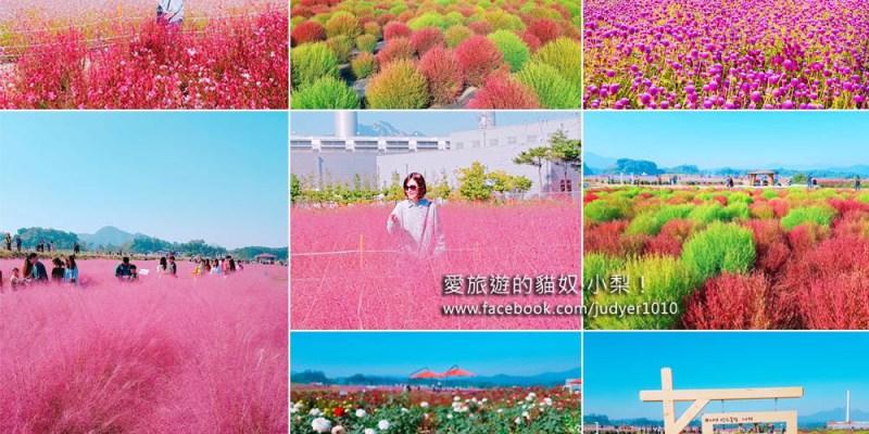 楊州娜麗公園詳細交通\Nari Park波波草、粉紅亂子草,好美好可愛!