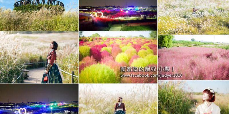 首爾紫芒節\芒草、波波草、粉紅亂子草,秋天的藍天公園(天空公園)好浪漫!(詳細路線帶你去)